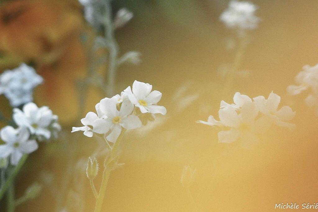 Flou floral