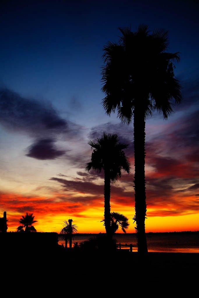 Aurore sur les palmiers